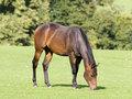 grazing-brown-horse.jpg