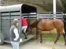 Horse_trailer_loading.jpg