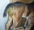 foal_with_diarrhea.jpg