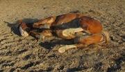 Rolling_Horse.JPG