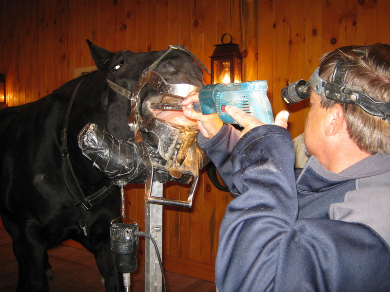 Equine Dentistry - Conley and Koontz Equine Hospital